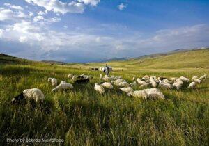 آکای Akay-print-sales-2-300x210 فروش تابلو عکس در تبریز