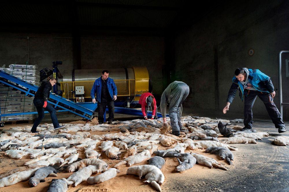در این انبار، اجساد بیجان سمورها قبل از فرایند پوست کنی دیده میشود. آنها به وسیله گاز های سمی قتل عام شدند. و سپس اجساد توسط نوار نقاله به اتاقهای دیگر منتقل میشوند. جایی که پوست ارزشمندشان از بدنشان جدا خواهد شد.